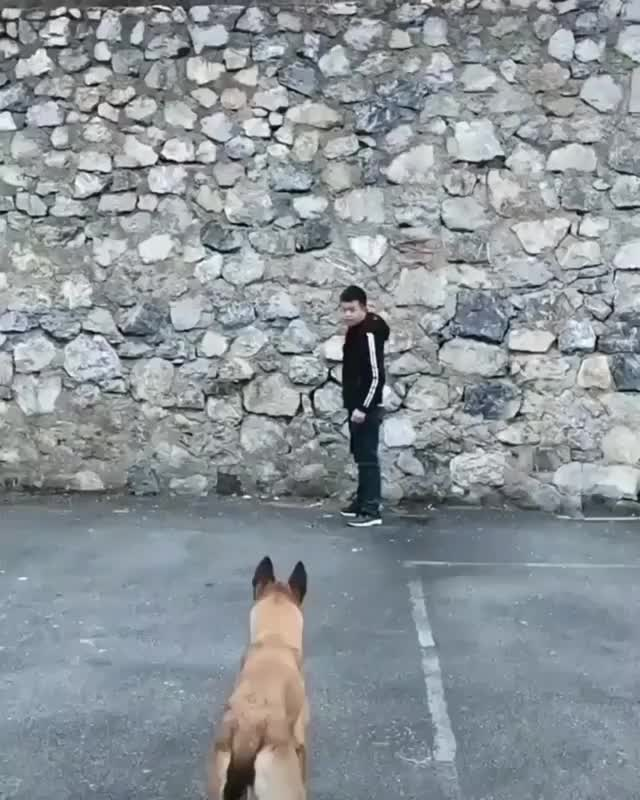 Watch and share This Athletic Dog GIFs by Mahmoud M. Mahdali on Gfycat