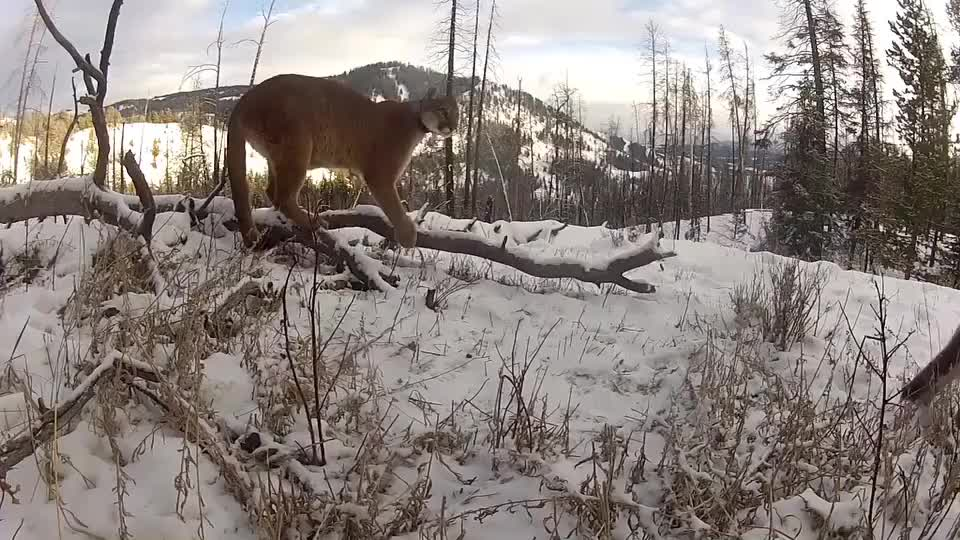 Curious cubs come to inspect the camera GIFs