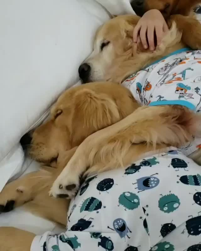 Watch and share Dogs   Puppies GIFs by gretta on Gfycat