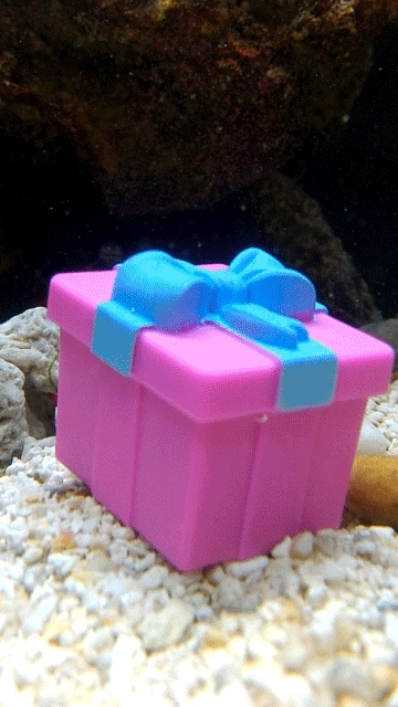 aquariums, awwnverts, Wikus' Cakeday GIFs