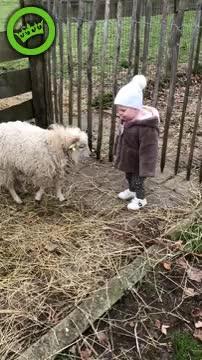 Met m'n dochter naar de kinderboerderij GIFs