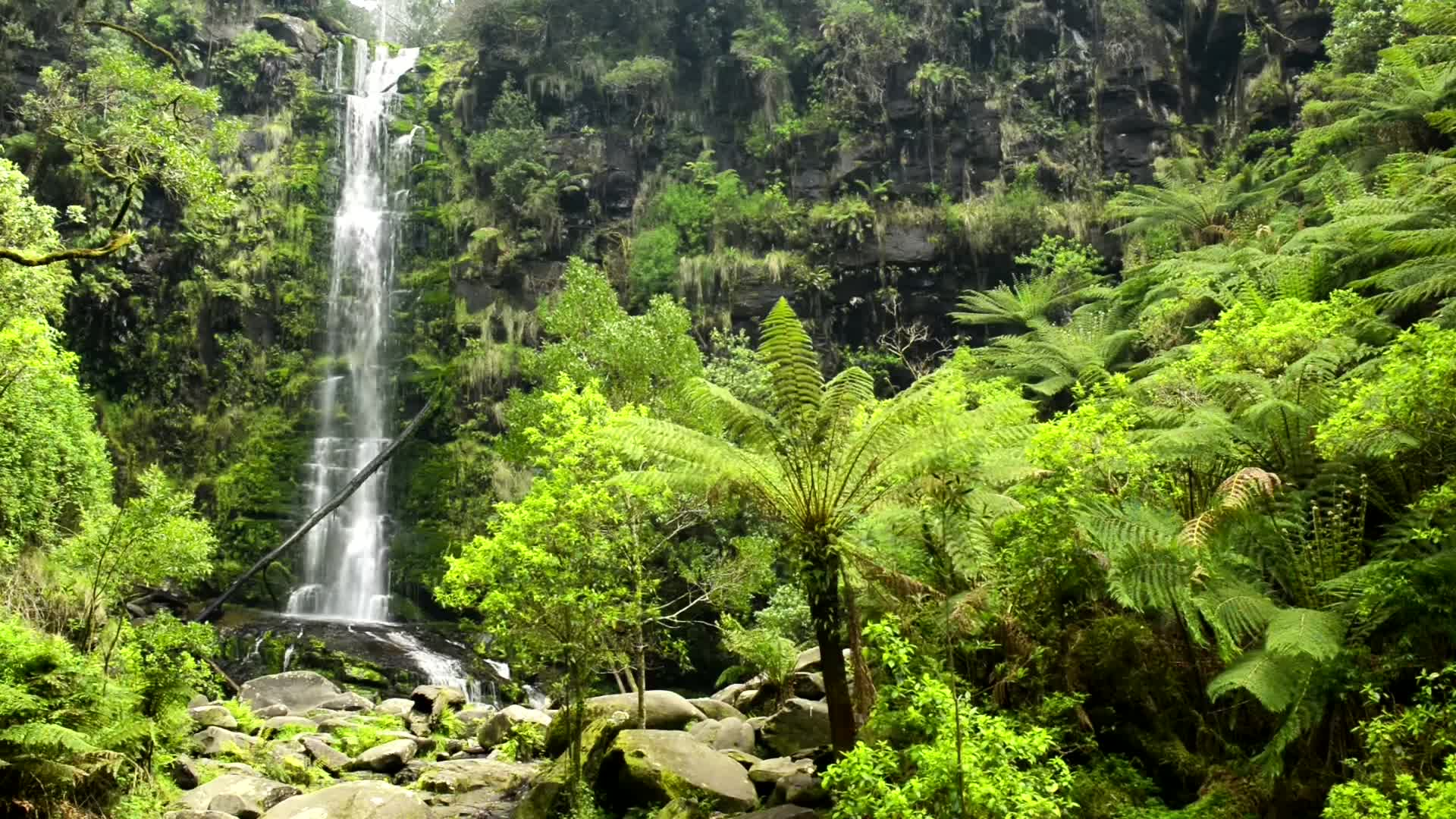 🎧 Waterfall Rainforest Ambient Sound Relaxing Forest Jungle Nature Sounds  For Relaxation