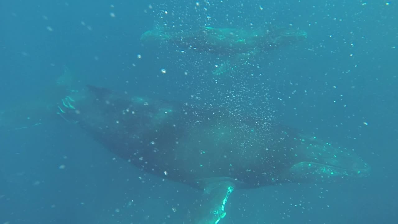 gopro, whales GIFs