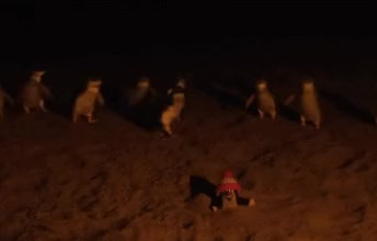 Watch and share Little Penguins GIFs on Gfycat