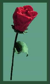 """Watch and share """"animated-rose-image-0002"""" GIFs on Gfycat"""