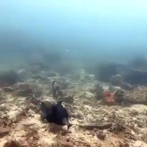 Fish isn't a fan of being filmed GIFs