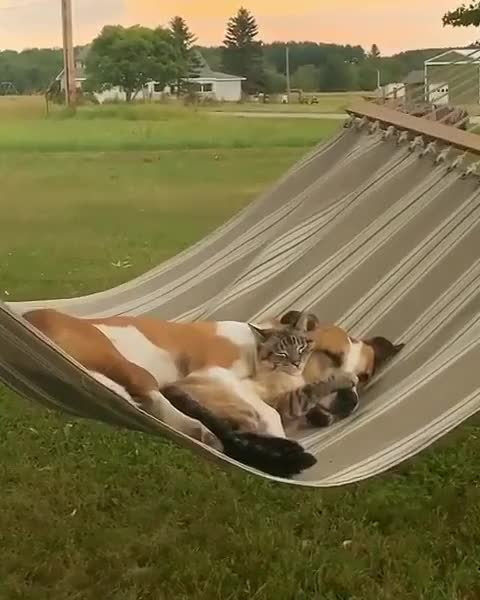 Chilling out on the hammock GIF by tothetenthpower