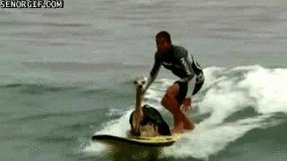 alpaca, alpacas, space, surfing, surfing alpaca GIFs