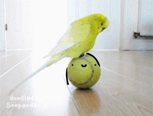 bird, woahpalwithbutt GIFs