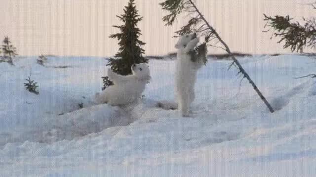 Watch and share Bears GIFs on Gfycat