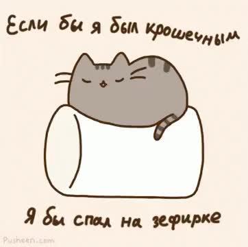 Watch and share Кот Устал Сон Спать Зефир Сонный Пушин GIFs on Gfycat
