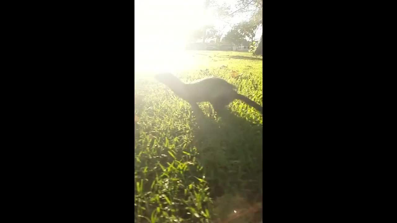 ferret, stoat, weasel, Ferrets in Slow Motion GIFs