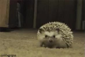 Watch Hiding Hedge Hog GIF on Gfycat. Discover more related GIFs on Gfycat