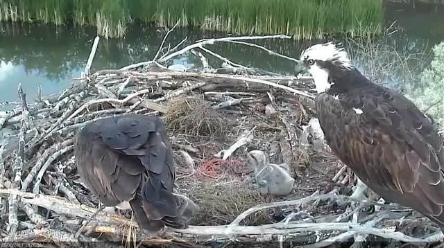 Watch and share Boulder County GIFs and Osprey GIFs by likkaon on Gfycat