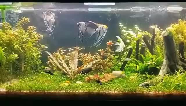 Watch and share Acuario Plantado:Especies Y Plantas. Reubicacion De Troncos. Heiter Que Molestan A Los Suscriptores. GIFs on Gfycat