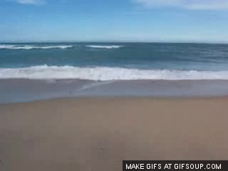 Watch and share Ocean Beach V1 GIFs on Gfycat