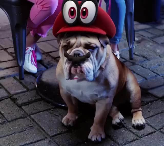 Watch this dog GIF by leahstark on Gfycat. Discover more mario dog, super mario odyssey musical, wink GIFs on Gfycat