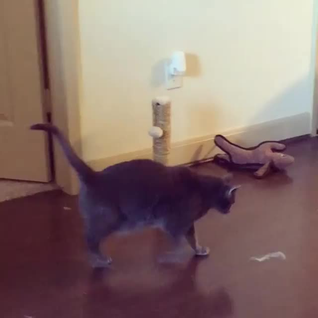 When dust bunnies attack GIFs