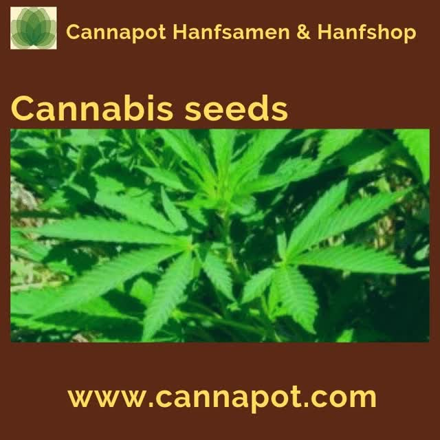 Watch and share Cannabis Seeds GIFs by cannapot on Gfycat