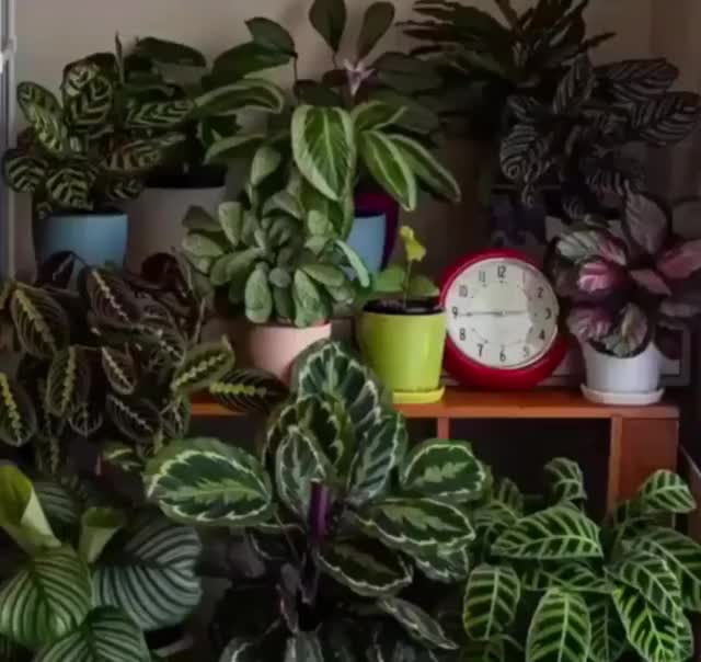 Watch and share Timelapse GIFs and Plants GIFs by Peake37902 on Gfycat