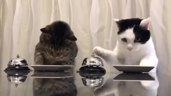 spectrosoldier, Cats learn that bell means treats (x-post /r/aww) GIFs