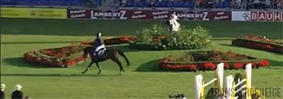 Watch and share Show Jumping News GIFs and Cian O'connor GIFs on Gfycat