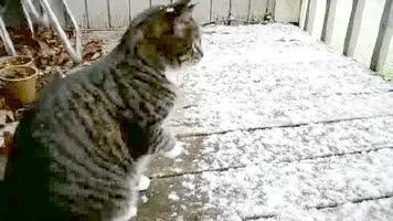 chat neige - Tuxboard