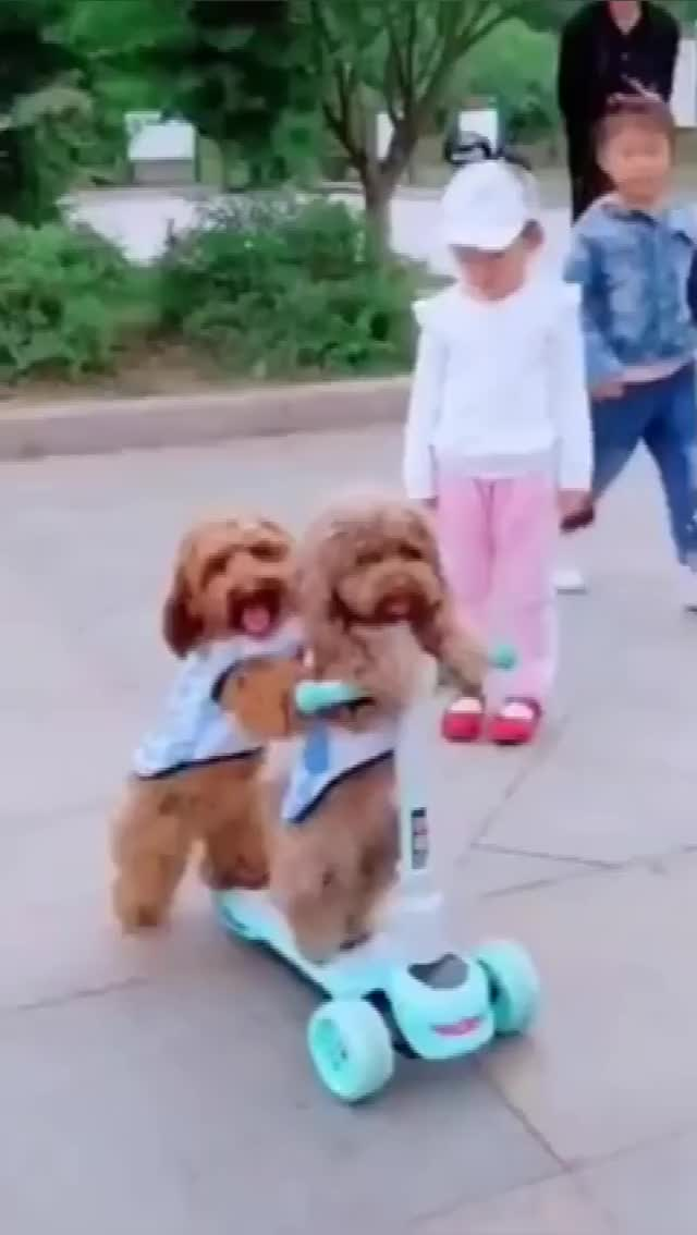 Watch and share Lovelydogs GIFs and Funnydogs GIFs by whatpetlike on Gfycat