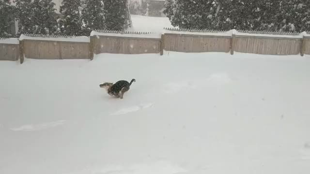 Watch and share Zoomies GIFs and Aww GIFs on Gfycat