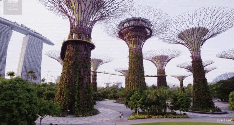 Singapore, bbc, earth, Singapore GIFs