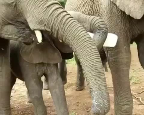 Watch and share Elephant GIFs and Nursery GIFs by vani  on Gfycat