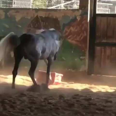Source:  arabian_horses_arab48 on instagram GIFs