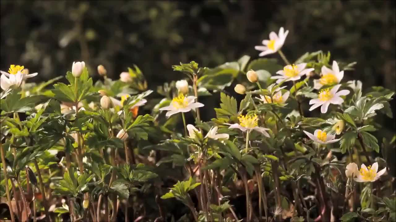 All Tags, Flowers, Top, all tags, attractive, beautiful, can, daisy, dancing, flower, flowers, interesting, top, very, video, Very Beautiful Flower Video!!! Flowers Can Dance GIFs