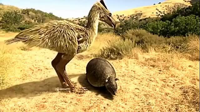 Watch Prehistoric Predators - Kelenken Vs. Parapropalaehoplophorus GIF on Gfycat. Discover more Armor, CGI, Carnivore, Glyptodont, Kelenkenguillermoi, Natgeo, Parapropalaehoplophorus, Peck, PrehistoricAnimal, PrehistoricAnimals, PrehistoricPredators, TerrorBird, animal, animals, bird, chordata, documentary, herbivore, hunt, miocene GIFs on Gfycat