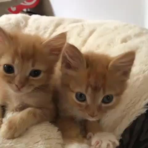 cute, kittens,  GIFs