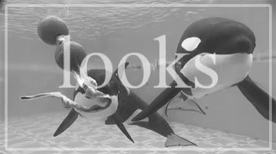 Watch and share Black And White GIFs and Captivity Kills GIFs on Gfycat