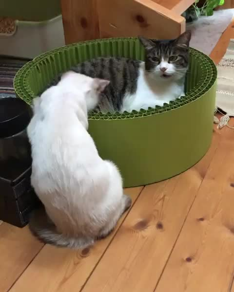 Watch and share Cats GIFs by Boojibs on Gfycat