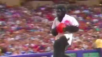 Watch this gorilla GIF by Off-Hand (@off-hand) on Gfycat. Discover more animals, gorilla, monkey, primate, zoo GIFs on Gfycat