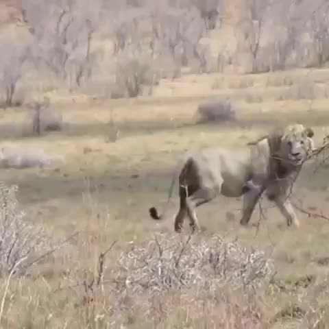 Watch and share Natures Gnarly GIFs by PrviAxiom on Gfycat