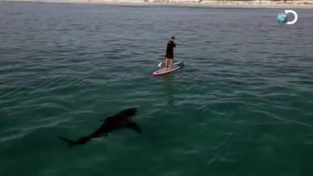 Watch and share A Lurking Shark • R/TheDepthsBelow GIFs on Gfycat