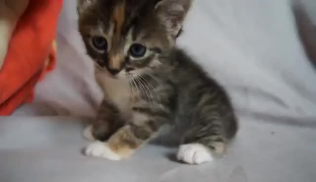 cat, cute, kitten, kitty, meow, Meow! GIFs