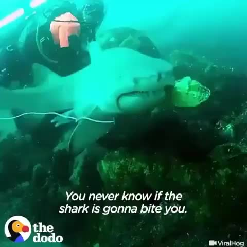 Watch and share Scuba Diver Rescuing A Shark That Had A Net Caught In Its Mouth GIFs by tothetenthpower on Gfycat