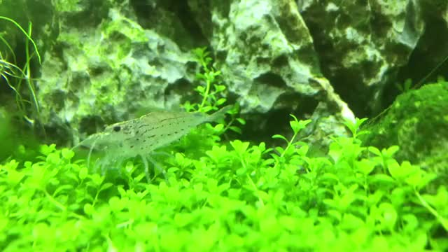 Watch and share Plantedtank GIFs on Gfycat