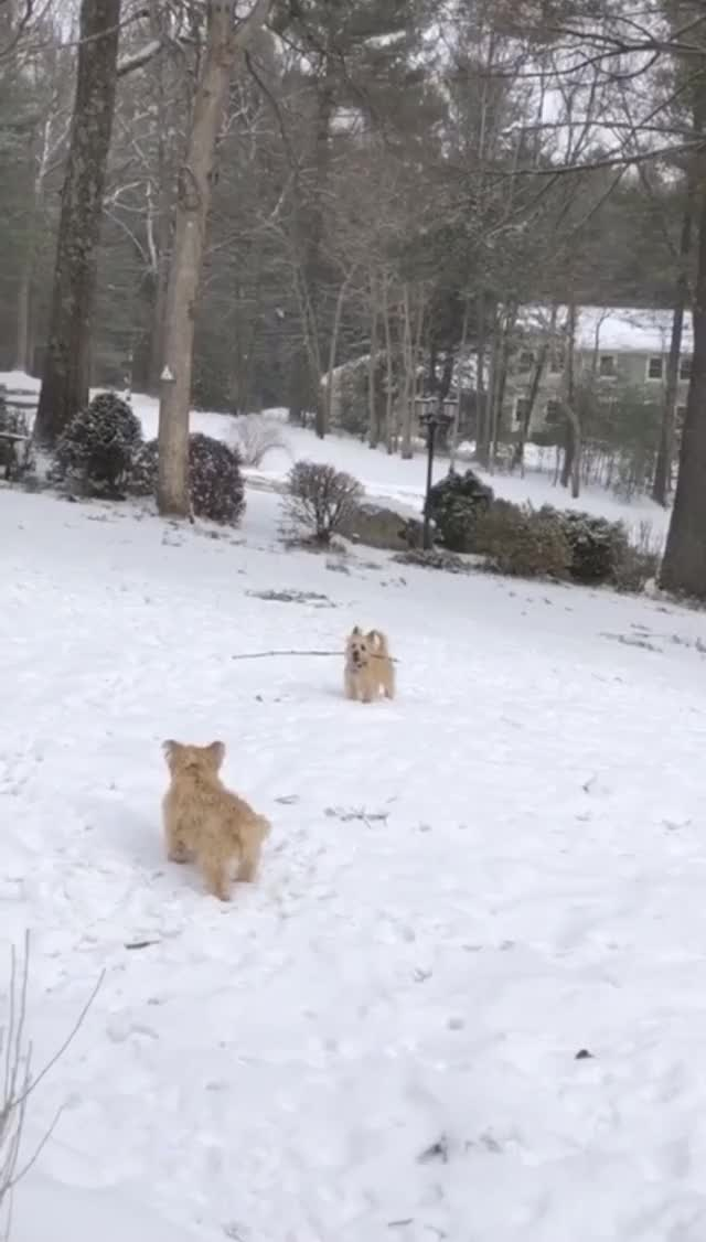 Watch and share Dogs GIFs and Snow GIFs on Gfycat