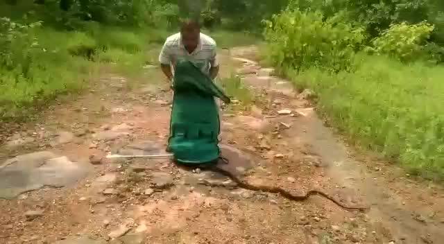 iiiiiiitttttttttttt, woahdude, Releasing Snakes into the Wild GIFs
