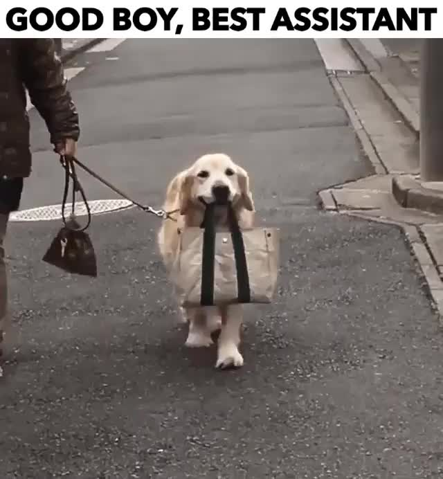 Watch and share Good-boy-best-assistant GIFs by Reactions on Gfycat