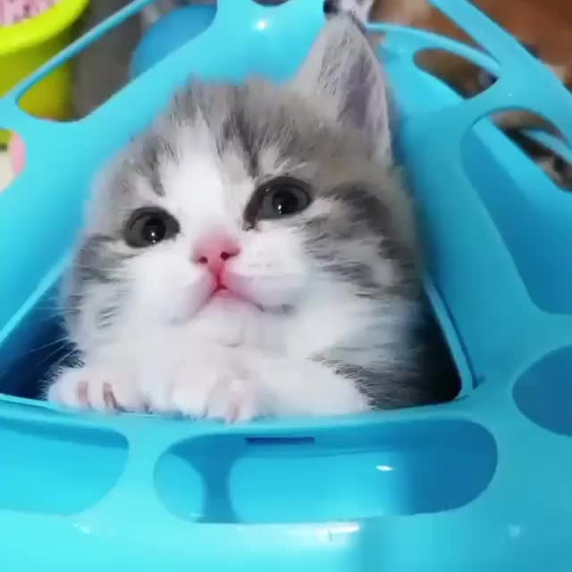 Watch and share Cute Little Kitten GIFs and Adorable Kitten GIFs by Mr.Ghost on Gfycat
