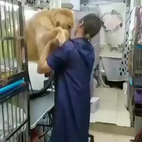 A vet helping a pupper feel more comfortable staying with them while their human is on vacation GIFs