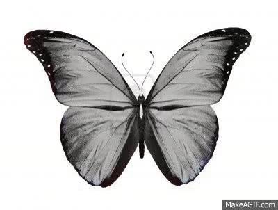 Watch butterfly GIF on Gfycat. Discover more related GIFs on Gfycat