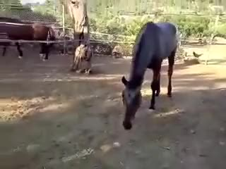 Watch horse says hi to chick GIF on Gfycat. Discover more Eyebleach, eyebleach GIFs on Gfycat